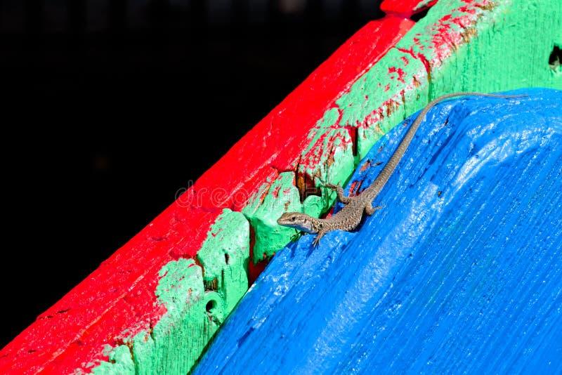 Jaszczurka na barwionym drewnianym stole fotografia royalty free