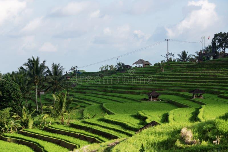 Jatiluwih, ферма террасы риса Бали стоковая фотография rf