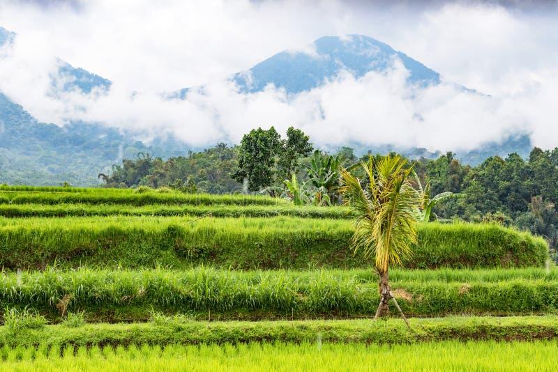 Jatiluwih Rice tarasy zdjęcie stock