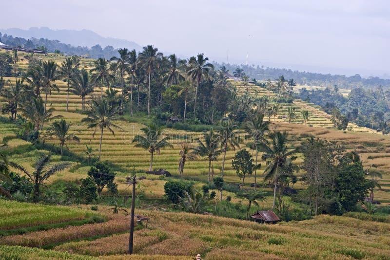 jatiluwih ricefields στοκ εικόνα