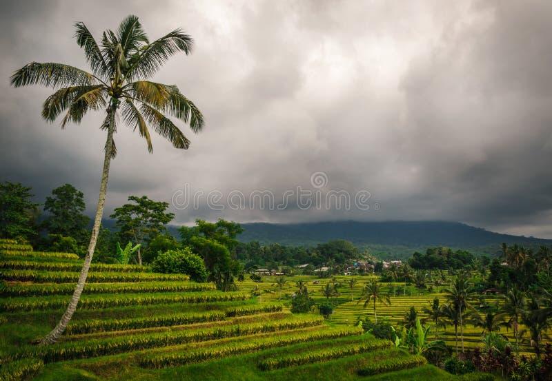 Jatiluwih risterrasser - Bali arkivfoton