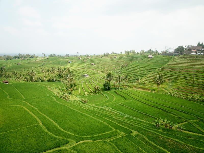Jatiluwih ryż tarasuje w górach Bali wyspa zdjęcia royalty free