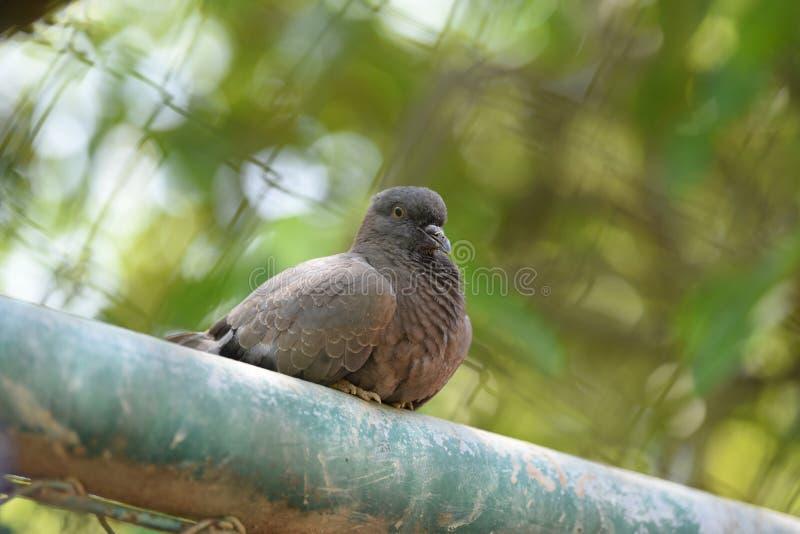Jaula de pájaros en el parque imagen de archivo