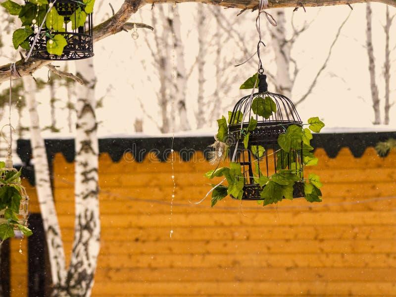 Jaula de pájaros en un árbol imágenes de archivo libres de regalías