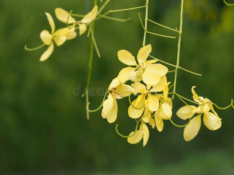 jaune photo stock