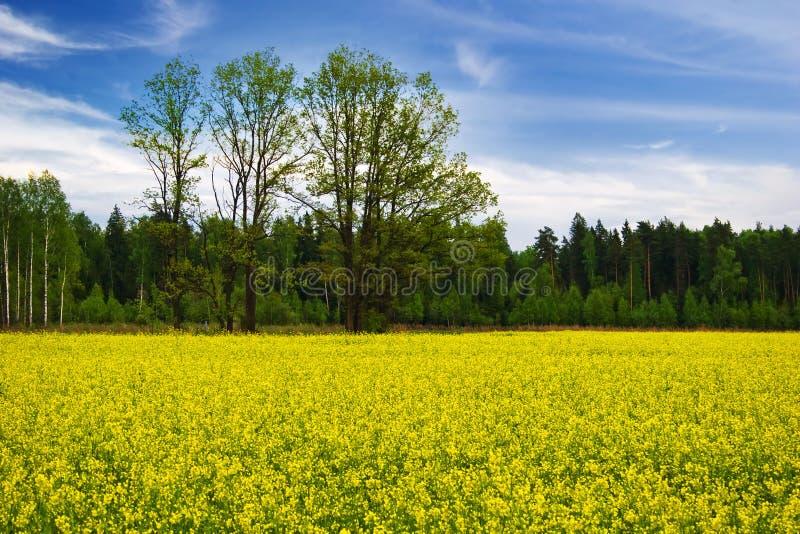 jaune bleu image libre de droits