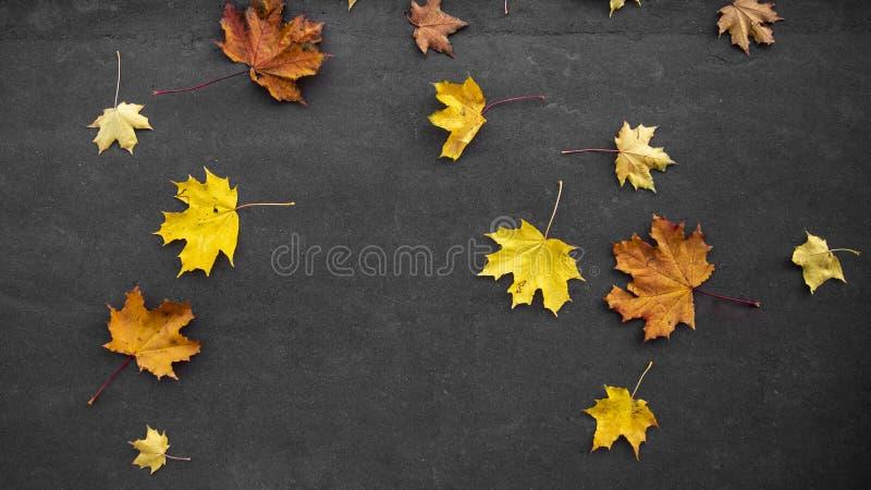 Jaune color? lumineux d'automne, orange, ?rable tomb? rouge part sur l'asphalte gris image stock