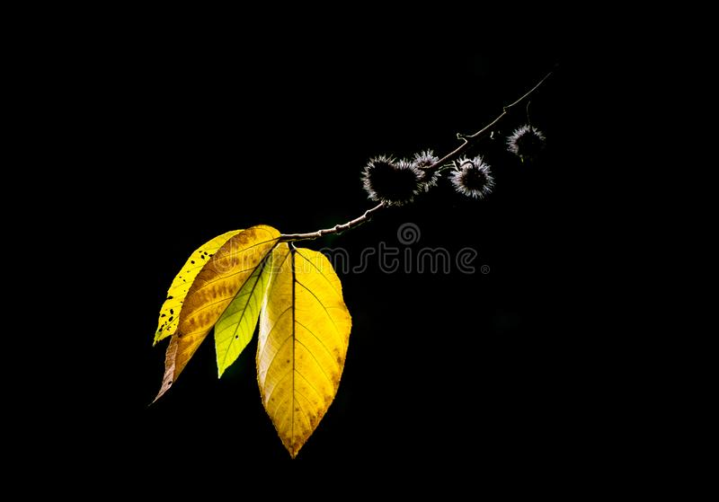Jaune d'automne, images stock