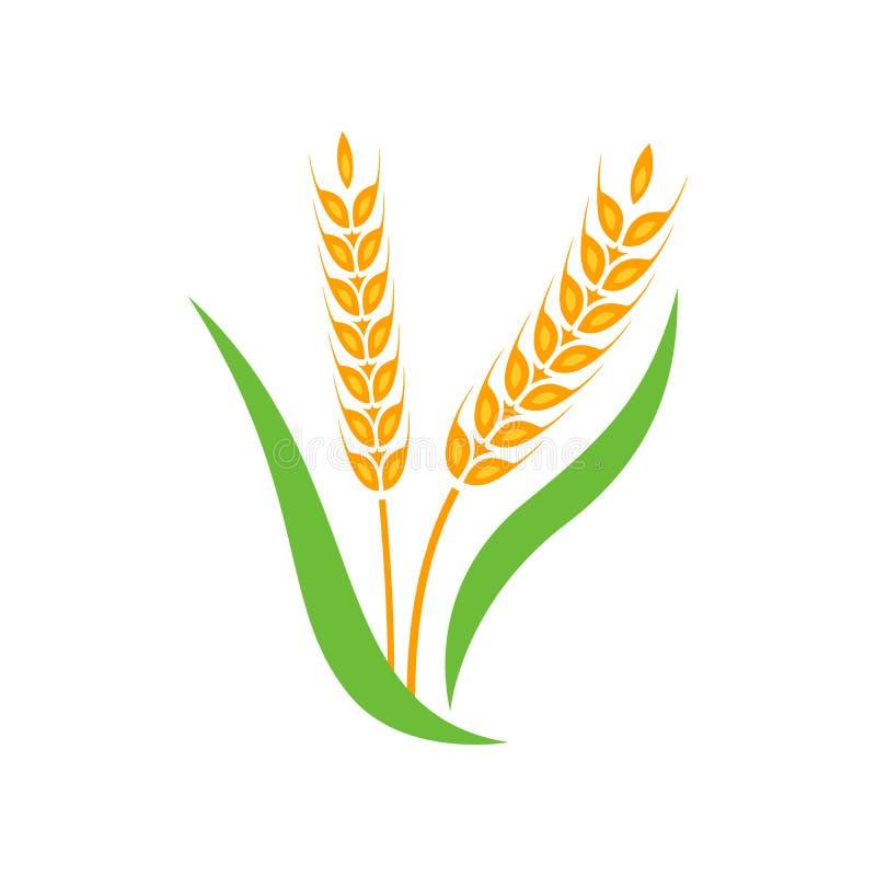 Jaune de transitoire d'orge de blé d'isolement sur le fond blanc illustration stock