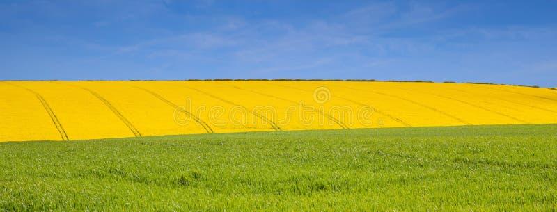 Jaune et bleu verts dans le Lincolnshire image stock