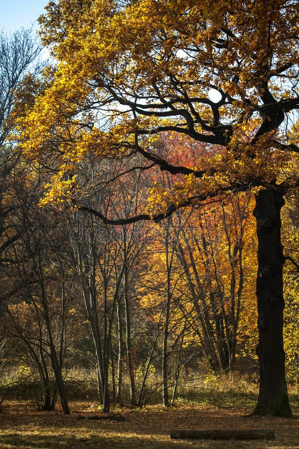 Jaune et rouge part à la lumière du soleil un jour ensoleillé d'automne dans la forêt dans la ville Lumière du soleil par le t images libres de droits