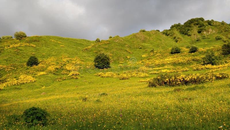Jaune et vert photo libre de droits