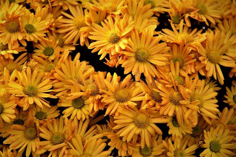 Jaunissez les fleurs en fleur image libre de droits