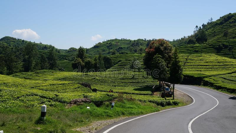 Java发球区域小农场 免版税库存图片