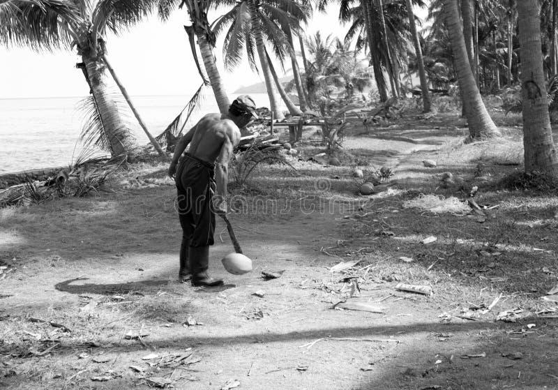 JAVA -2016年9月3日:与他的大砍刀的人滴下的椰子 库存照片