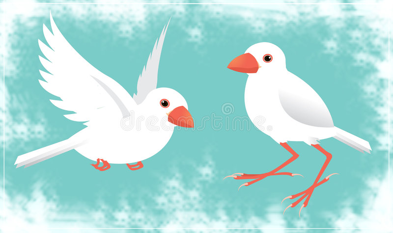Download Java sparrow stock vector. Image of nature, cute, free - 4564405