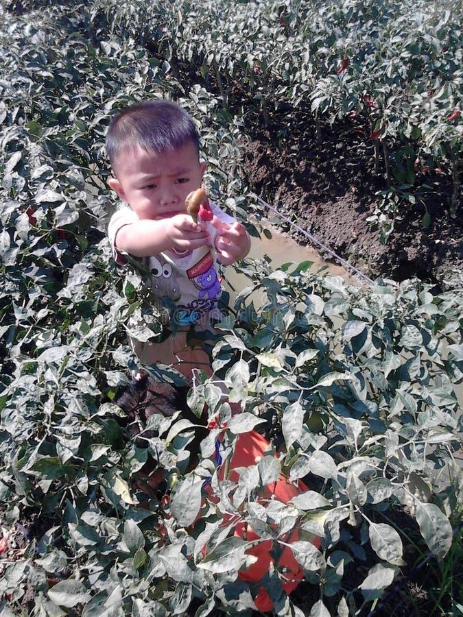 Javad en la granja de los chiles foto de archivo libre de regalías