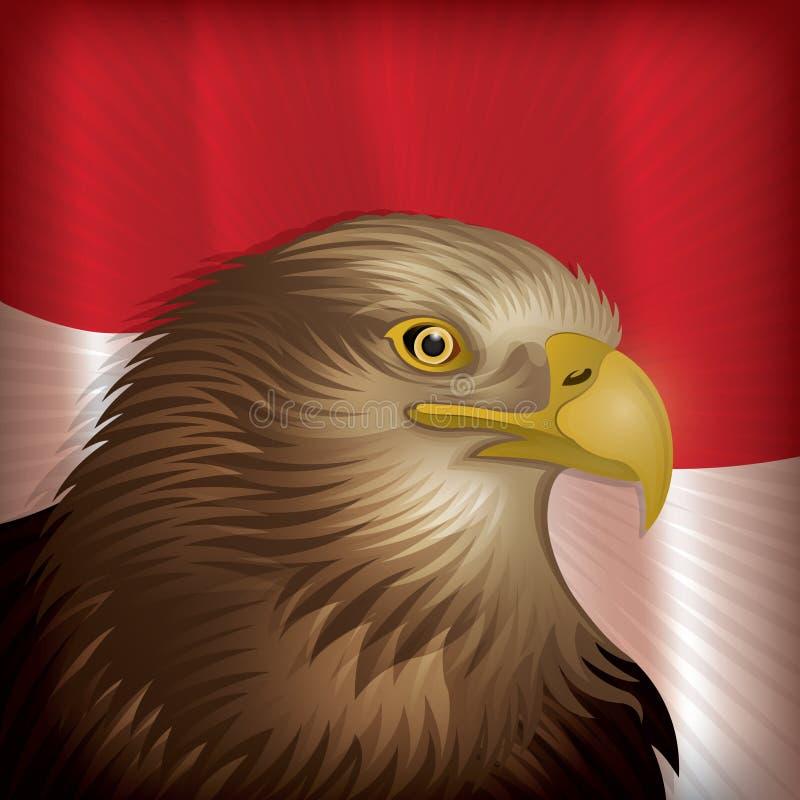 Javan Eagle stock foto's