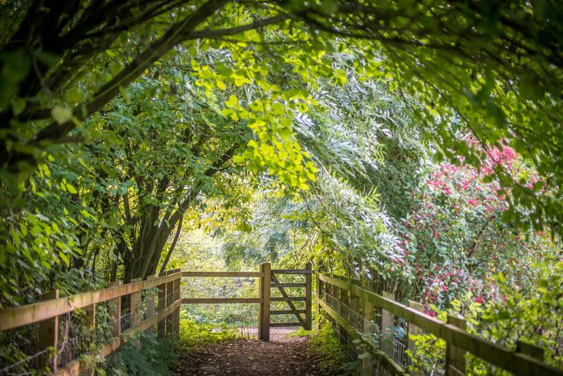 Jawna footpath brama przy końcówka drzewny tunel zdjęcia stock
