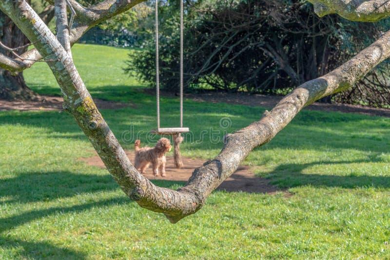 Jawnego parka arkany huśtawka z brązu szczeniakiem obrazy royalty free