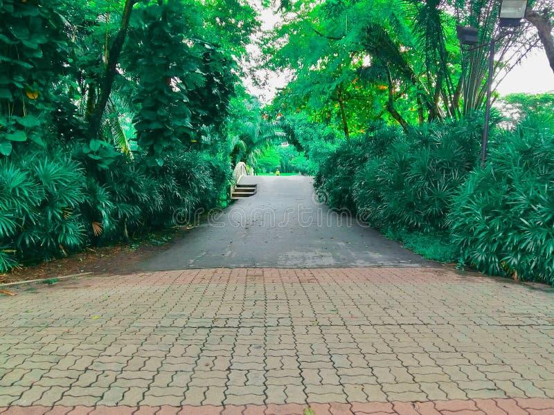 Jawni parki i wiele zieleni drzewa z mostami, fotografia stock