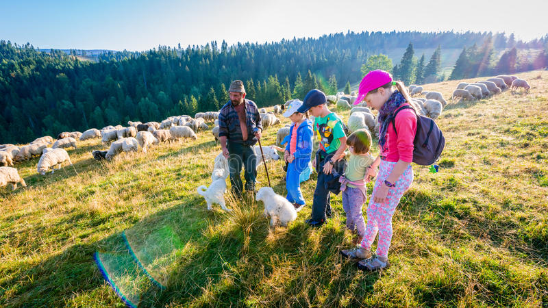 Jaworki, Poland - August 30, 2015: Summer adventure - shepherd grazing sheep in the mountains royalty free stock image