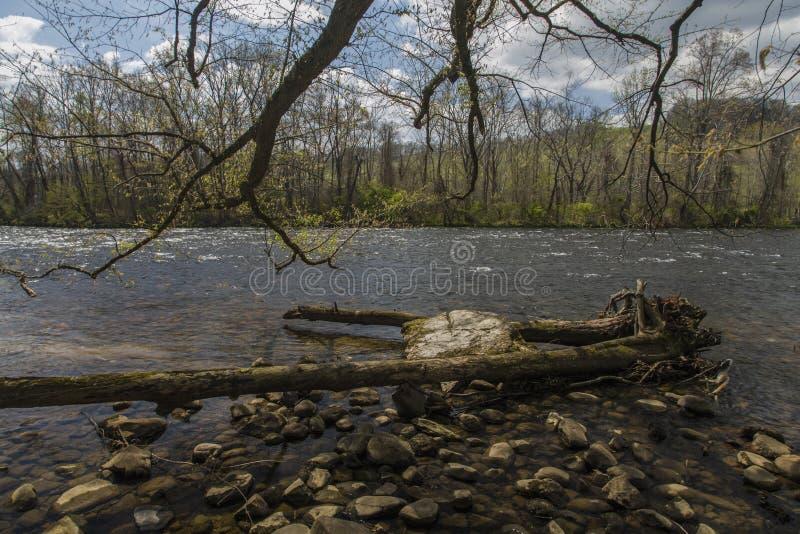 Jaworowy tłumu stanu park, Elizabethton, TN obraz stock