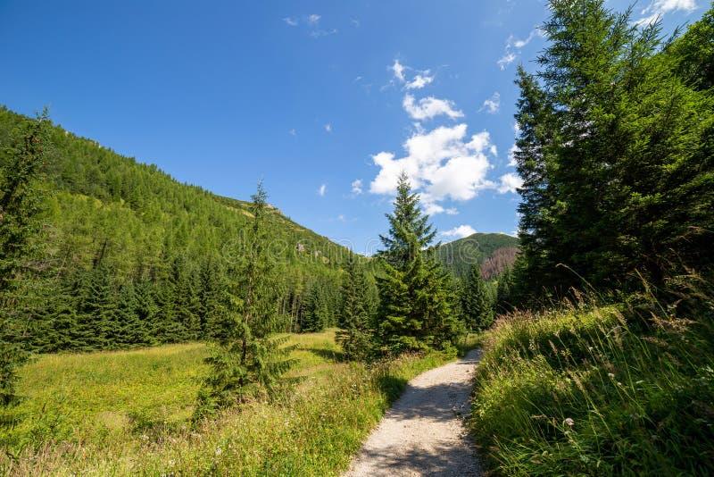 Jaworzynka Valley in Tatra mountains. Poland stock photos