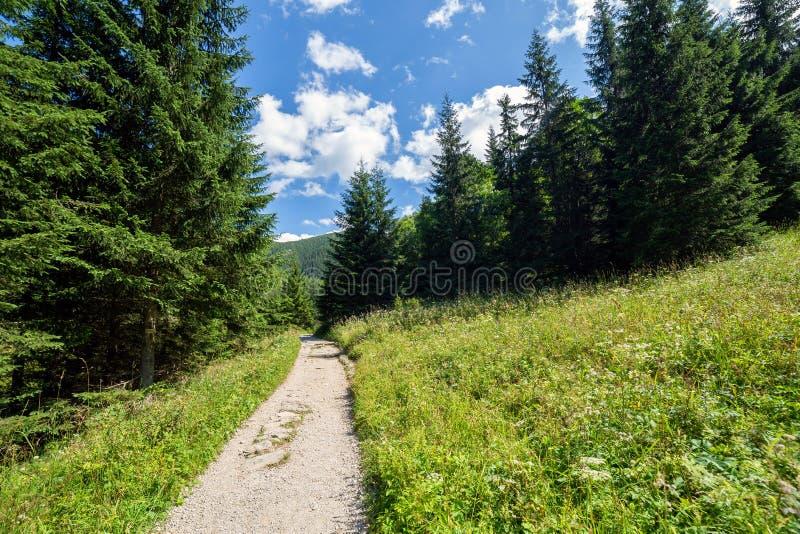 Jaworzynka Valley in Tatra mountains. Poland stock images