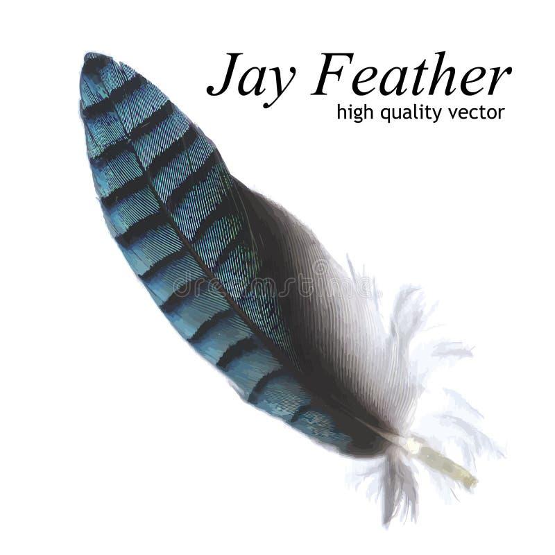 Jay Feather (vecteur de haute qualité) illustration libre de droits