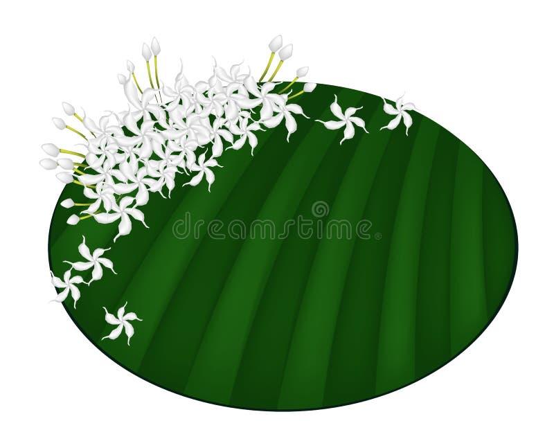 Jazmín de cabo fresco en la hoja verde del plátano libre illustration