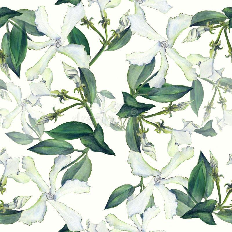 Jazmín Fondo inconsútil Collage de flores en un backgrou de la acuarela ilustración del vector