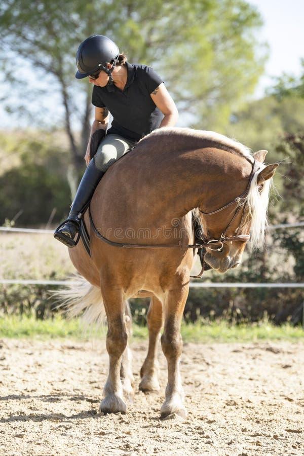 Jeździec i koń fotografia stock