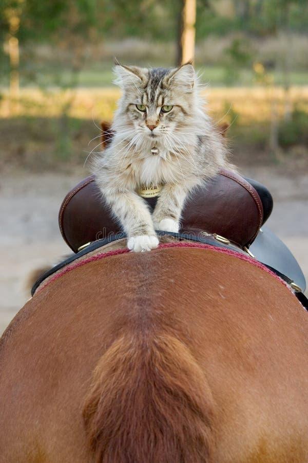 jeździec kotem obraz royalty free