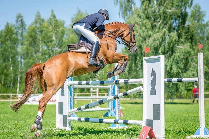Jeździec na czerwonym przedstawienie bluzy koniu pokonuje wysokie przeszkody w arenie dla przedstawienia doskakiwania na tła nieb zdjęcia royalty free