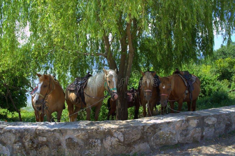 Jeździeccy konie w kraju zdjęcie stock