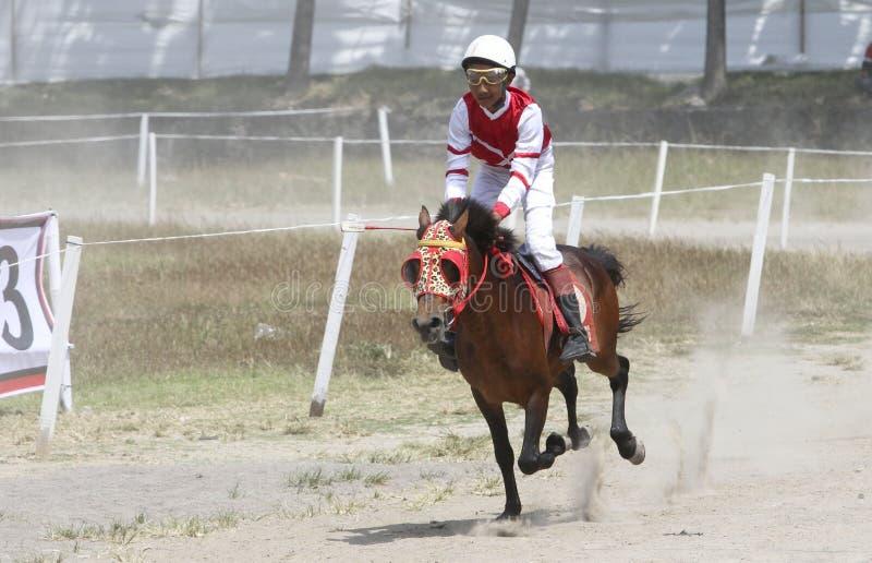 Jeździecki koń fotografia stock
