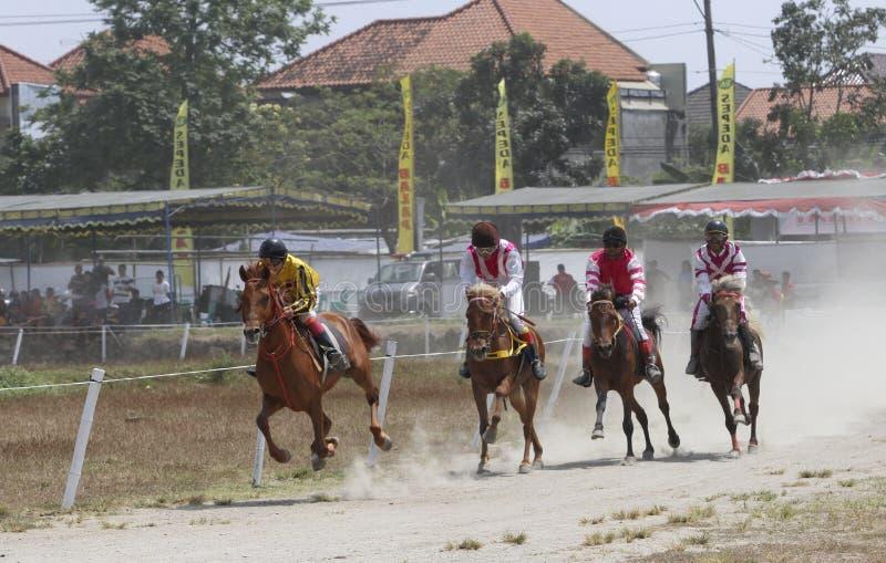 Jeździecki koń zdjęcia stock
