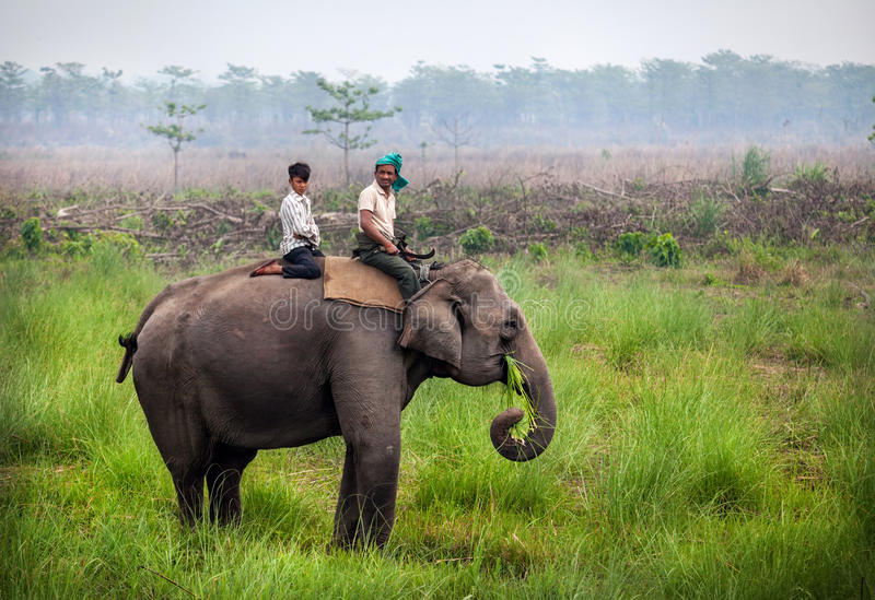 Jeździecki słoń w Nepal obrazy royalty free