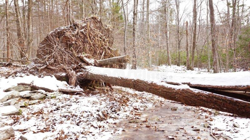 Jeżeli drzewo Spada W lesie zdjęcie stock