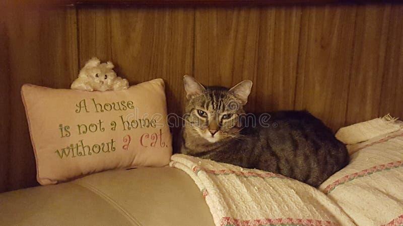 Je suis maison ! photo stock