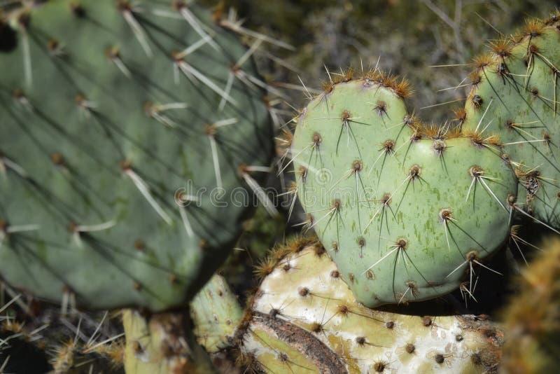 Je t'aime cactus photos libres de droits
