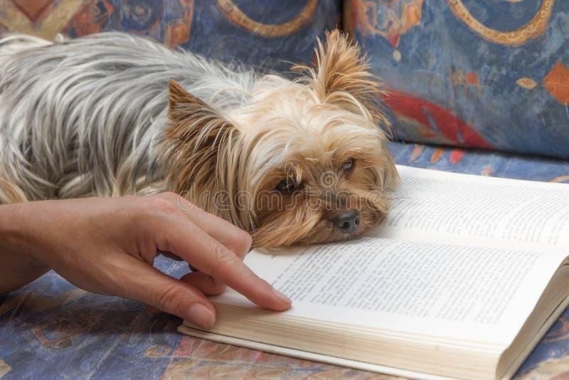 Je vraiment n'ai pas plaisir la lecture