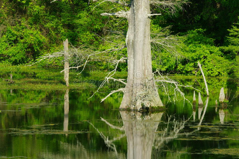 Jean Lafitte Swamp arkivfoton