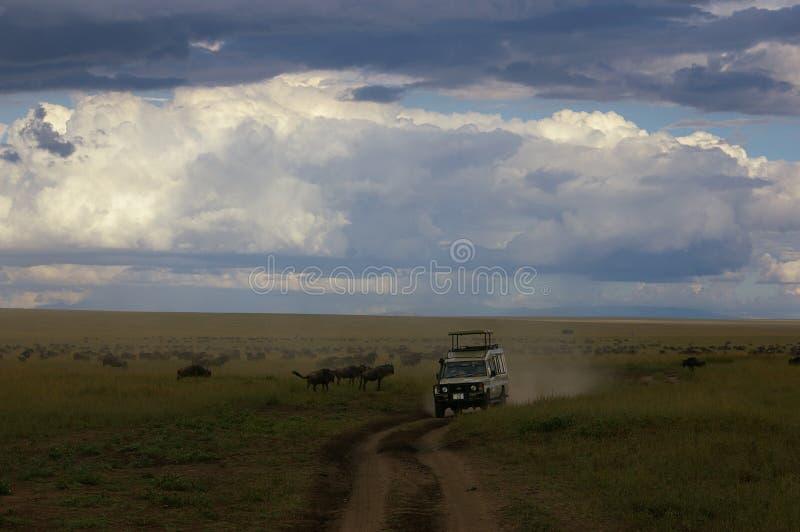 Jechać grupą wildebeests i zebra w Tanzania zdjęcia stock