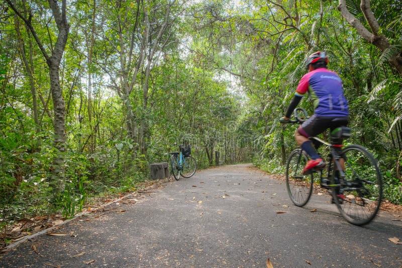 Jechać na rowerze pas ruchu dla cyklistów jeździć na rowerze wzdłuż drzew w lesie fotografia stock