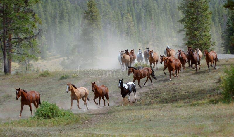 jedź 1 koń obrazy royalty free
