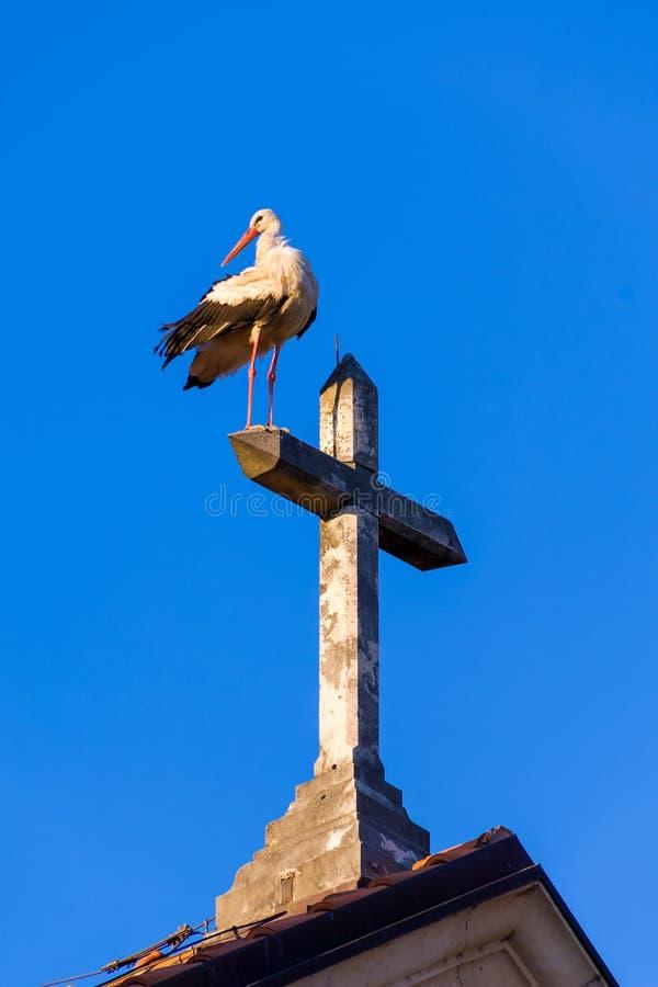 Jeden bocian przy wierzchołkiem kościół i krzyż fotografia royalty free