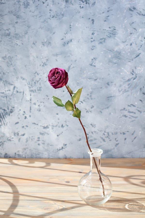 Jeden czerwieni r??y kwiat z d?ugim trzonem i zieleni li?cie w szklanej round wazie na drewnianym stole na szarym tle zamykamy w  obrazy royalty free