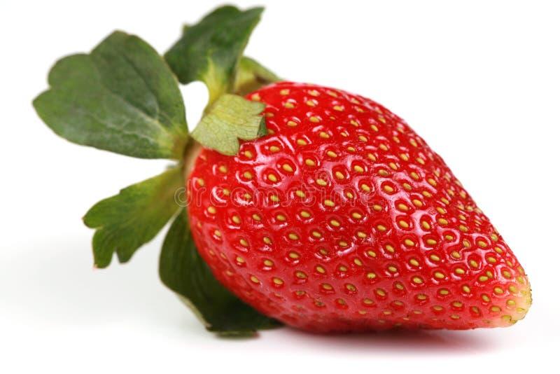 jeden czerwona truskawka zdjęcie stock